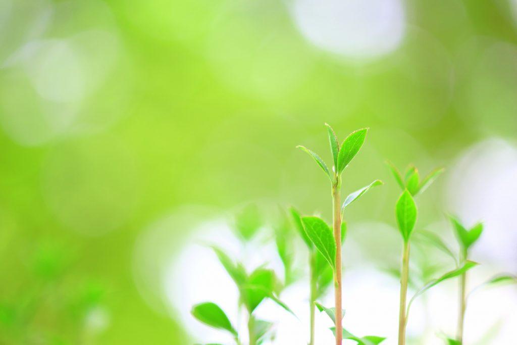 ギフトユアライフ 【Blog】自己成長について